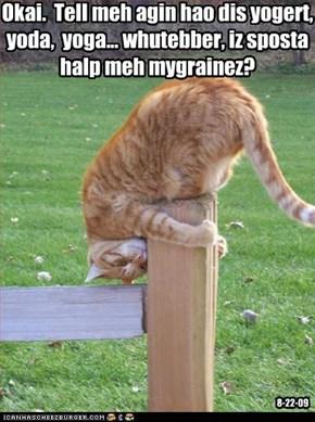 Okai.  Tell meh agin hao dis yogert,  yoda,  yoga... whutebber, iz sposta halp meh mygrainez?
