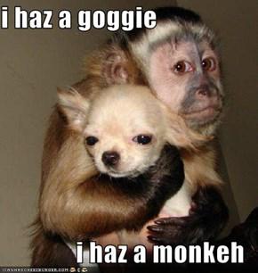 i haz a goggie  i haz a monkeh