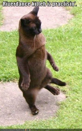 Riverdance kitteh iz practisin'.