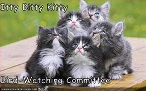 Itty Bitty Kitty  Bird-Watching Committee