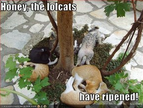 Honey, the lolcats  have ripened!