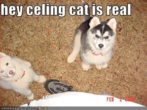 hey celing cat is real