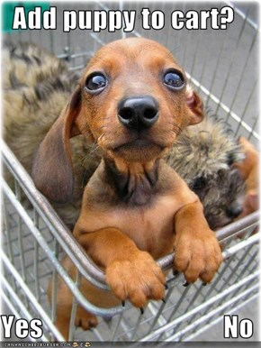 Add puppy to cart?  Yes                                 No