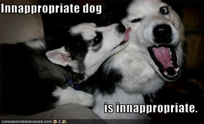Innappropriate dog   is innappropriate.