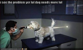 i see the problem yer lol dog needs more lol