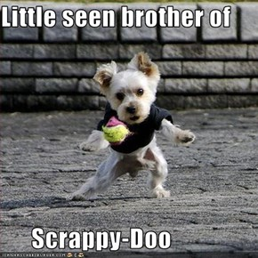 Little seen brother of        Scrappy-Doo