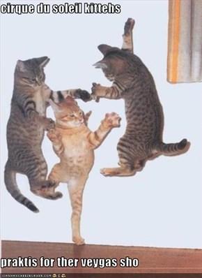 cirque du soleil kittehs  praktis for ther veygas sho