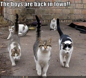 The boys are back in town!!