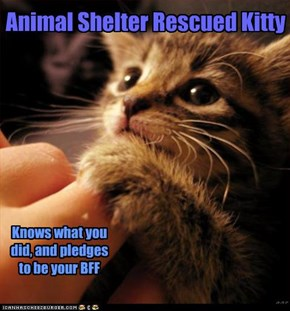 Animal Shelter Rescued Kitty