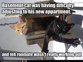 Basement cat was having dificulty adjusting to his new appartment.