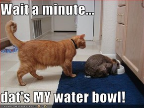 Wait a minute...  dat's MY water bowl!