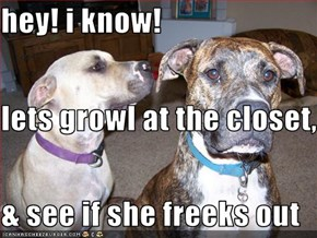 hey! i know! lets growl at the closet, & see if she freeks out