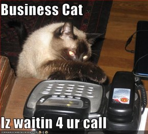 Business Cat  Iz waitin 4 ur call