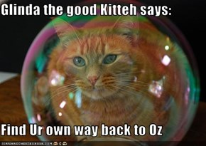 Glinda the good Kitteh says:  Find Ur own way back to Oz