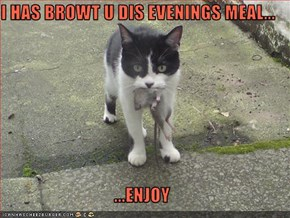 I HAS BROWT U DIS EVENINGS MEAL...  ...ENJOY