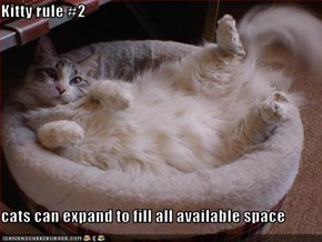 Kitty rule #2  cats can expand to fill all available space