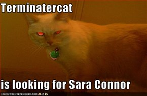 Terminatercat  is looking for Sara Connor