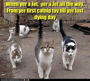 When yer a Jet,  yer a Jet all the way, From yer first catnip toy till yer last dying day