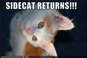 SIDECAT RETURNS!!!