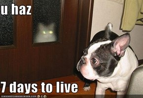 u haz  7 days to live