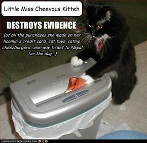 Little Miss Cheevous Kitteh