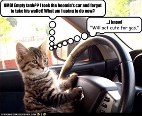 OMG! Empty tank?? I took the hoomin's car and forgot to take his wallet! What am I going to do now?