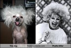 This dog Totally Looks Like Phyllis Diller