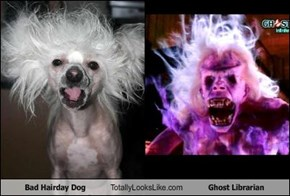Bad Hairday Dog Totally Looks Like Ghost Librarian