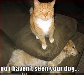 no i haven't seen your dog...