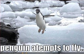 penguin atempts to fly...