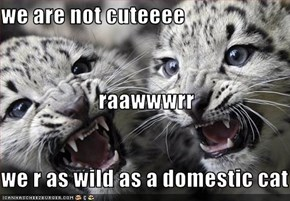 we are not cuteeee                       raawwwrr we r as wild as a domestic cat