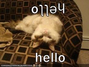 oןןǝɥ             hello