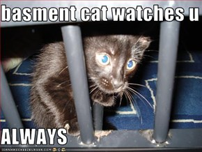 basment cat watches u ...  ALWAYS