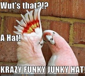 Wut's that?!? A Hat! KRAZY FUNKY JUNKY HAT!