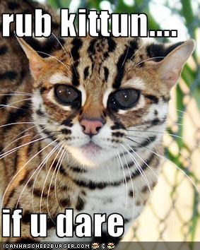 rub kittun....  if u dare