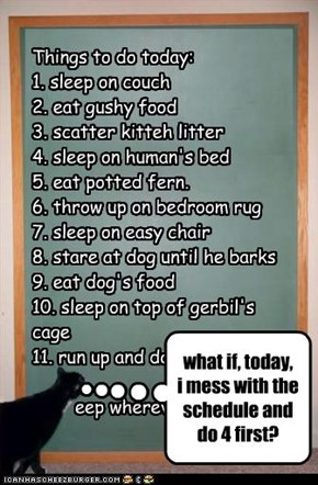 Things to do today: 1. sleep on couch 2. eat gushy food 3. scatter kitteh litter 4. sleep on human's bed 5. eat potted fern. 6. throw up on bedroom rug  7. sleep on easy chair  8. stare at dog until he barks 9. eat dog's food 10. sleep on top of gerbil's