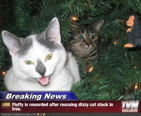 Breaking News - Fluffy is rewarded after rescuing dizzy cat stuck in tree.