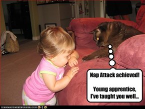Nap Attack achieved!  Young apprentice, I've taught you well...