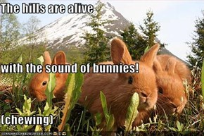 The hills are alive with the sound of bunnies! (chewing)