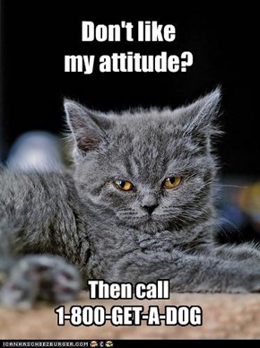Don't like my attitude?