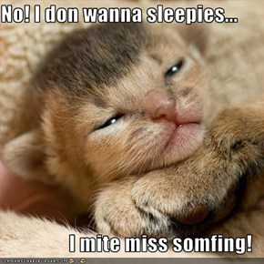 No! I don wanna sleepies...  I mite miss somfing!