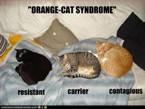 """ORANGE-CAT SYNDROME"""
