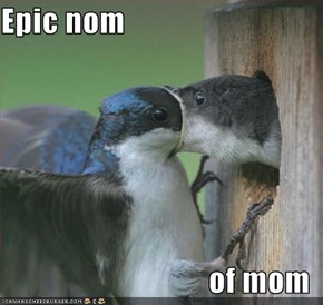 Epic nom  of mom