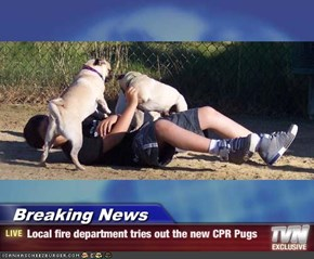 Breaking News - Local fire department tries out the new CPR Pugs
