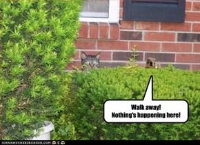 Walk away!  Nothing's happening here!