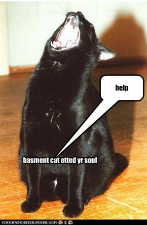 basment cat etted yr soul