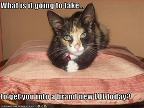 What is it going to take...  to get you into a brand new LOL today?