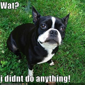 Wat?  i didnt do anything!