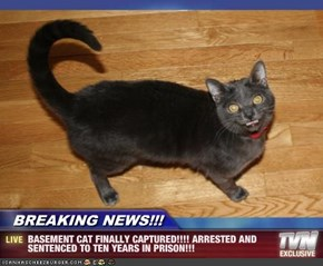 BREAKING NEWS!!! - BASEMENT CAT FINALLY CAPTURED!!!! ARRESTED AND SENTENCED TO TEN YEARS IN PRISON!!!