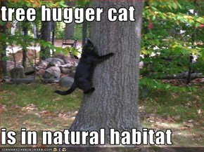 tree hugger cat  is in natural habitat